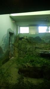 Sleeping panda :)